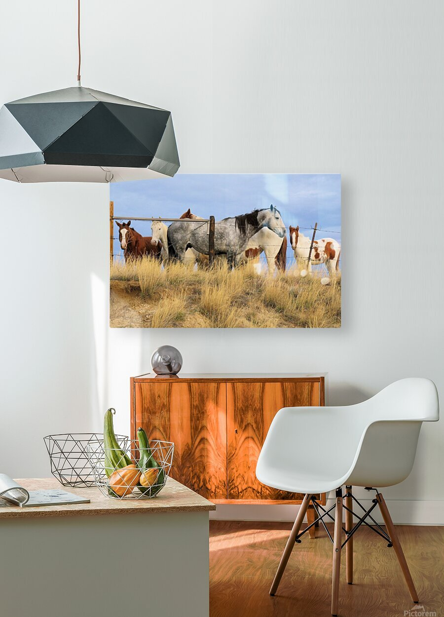 Little Bighorn Ponies  HD Metal print with Floating Frame on Back