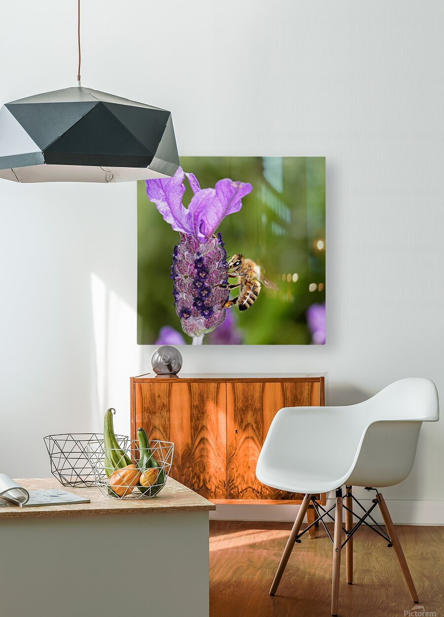 Bee On Lavender  HD Metal print with Floating Frame on Back
