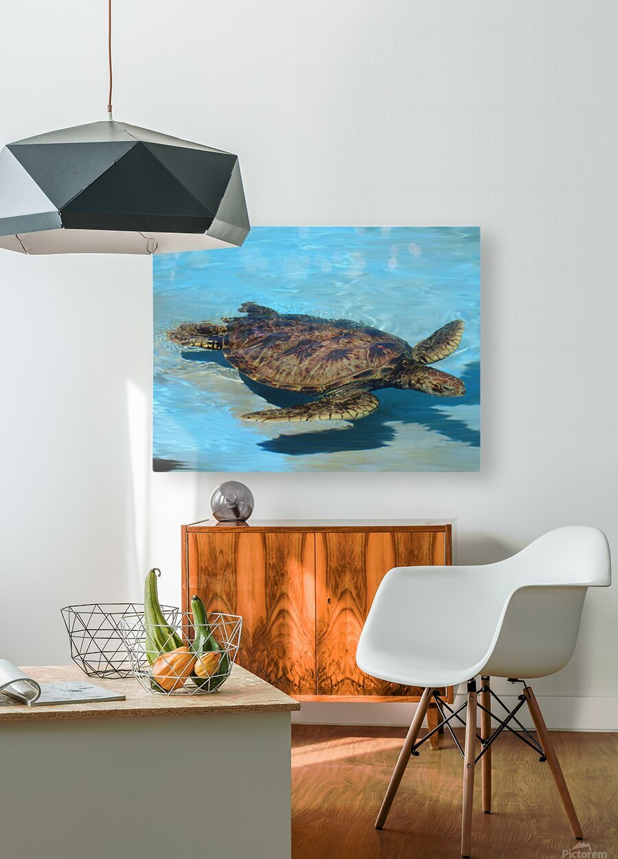 Sea Turtle  HD Metal print with Floating Frame on Back