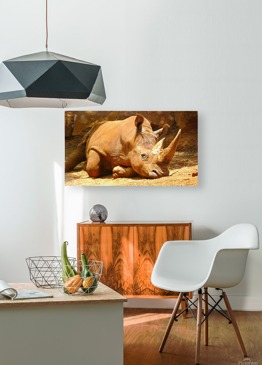 Rhino - Natural World Kids Gallery  HD Metal print with Floating Frame on Back
