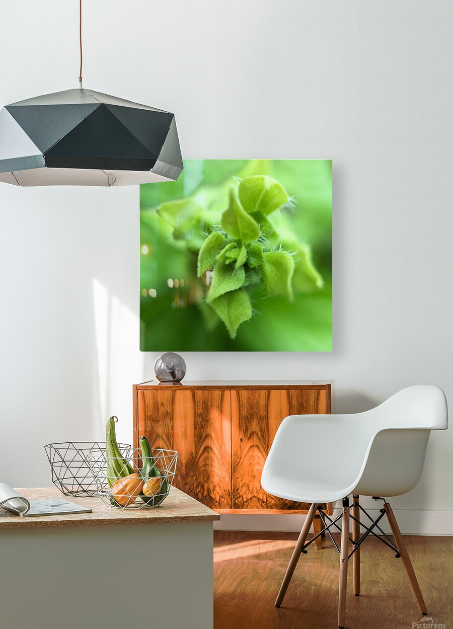 24_Green_Plant_6772_SQUARE  HD Metal print with Floating Frame on Back