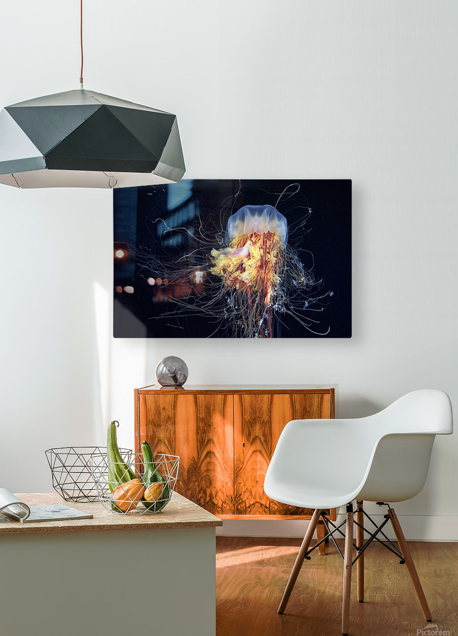 Giant Lion's Mane  HD Metal print with Floating Frame on Back