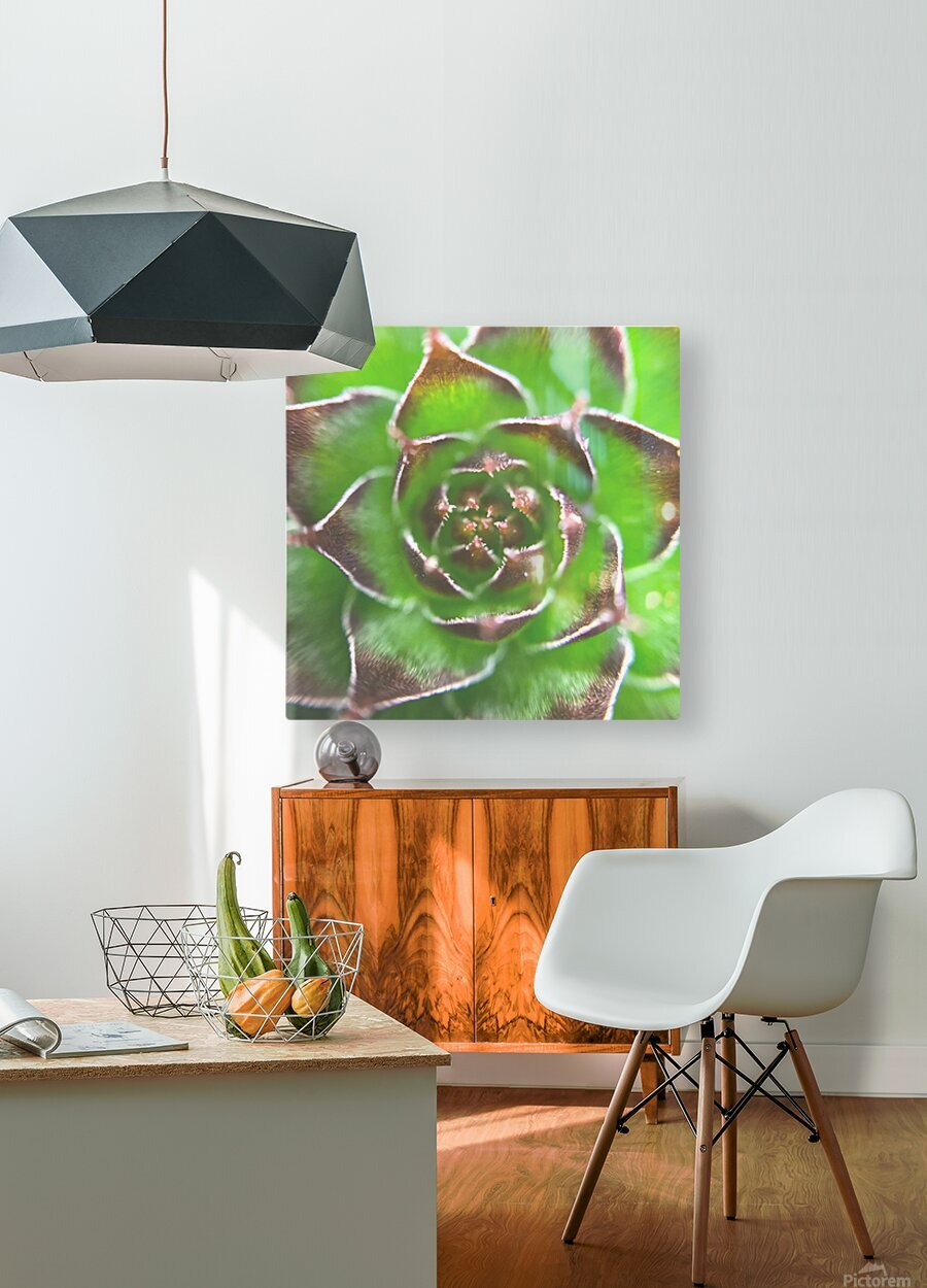 20_Green Succulent Perennial - Verte Vivace_9780_CLEAR SQUARE  HD Metal print with Floating Frame on Back