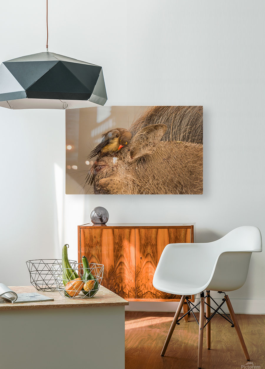 Hideaway by Jaco Marx   HD Metal print with Floating Frame on Back