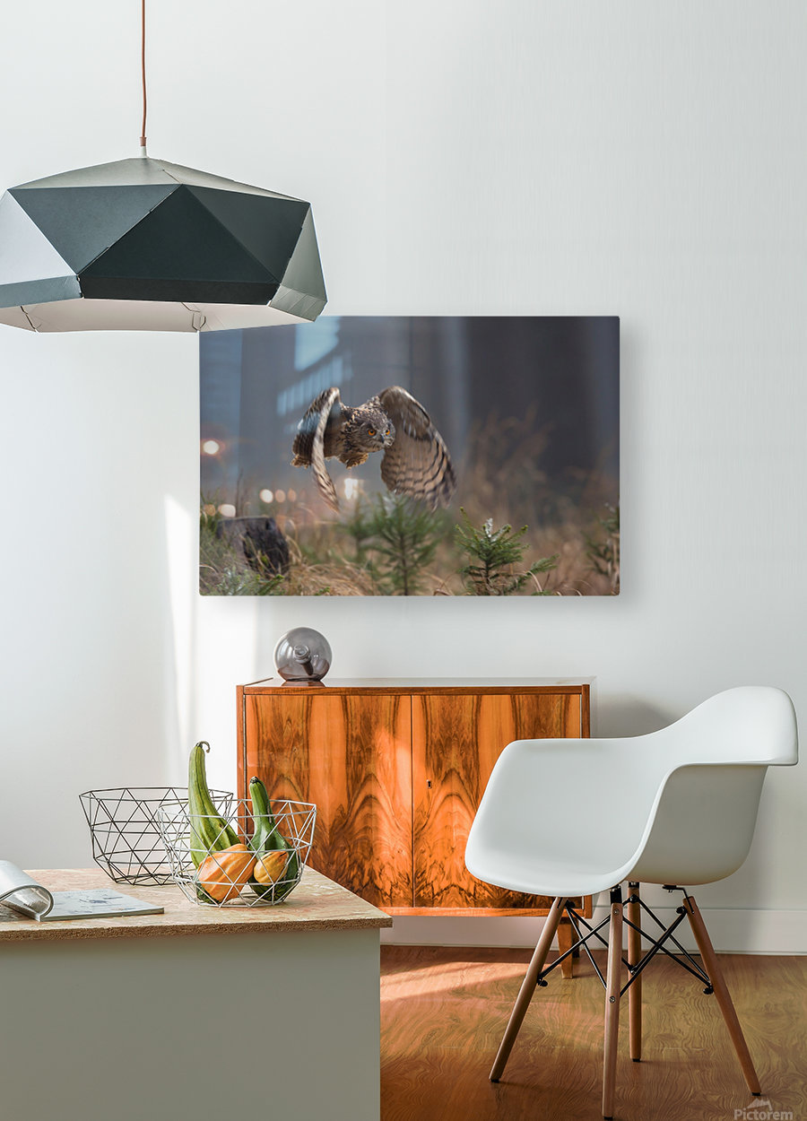 Eurasian Eagle-Owl by Milan Zygmunt   HD Metal print with Floating Frame on Back