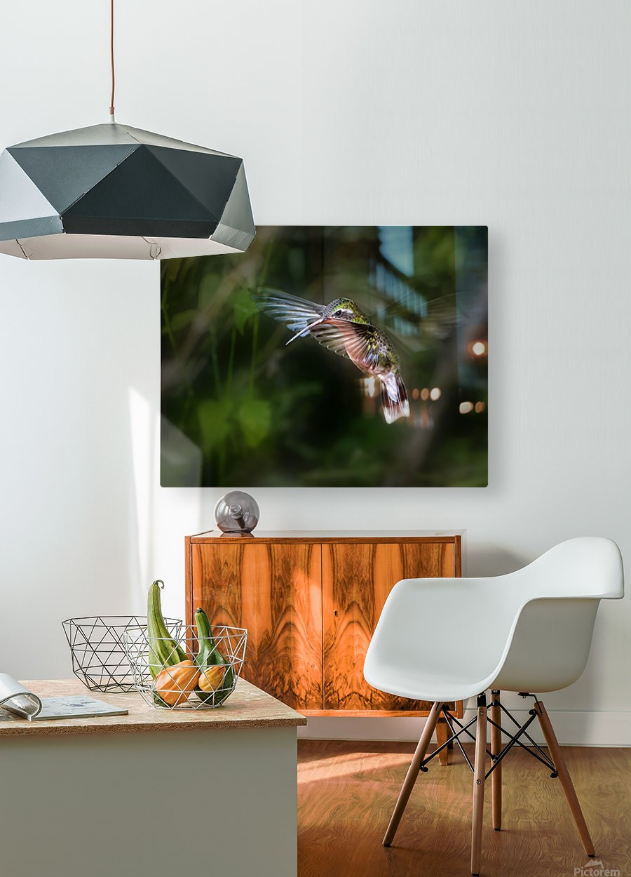 Hummingbird 1B by Leigh Pelton   HD Metal print with Floating Frame on Back