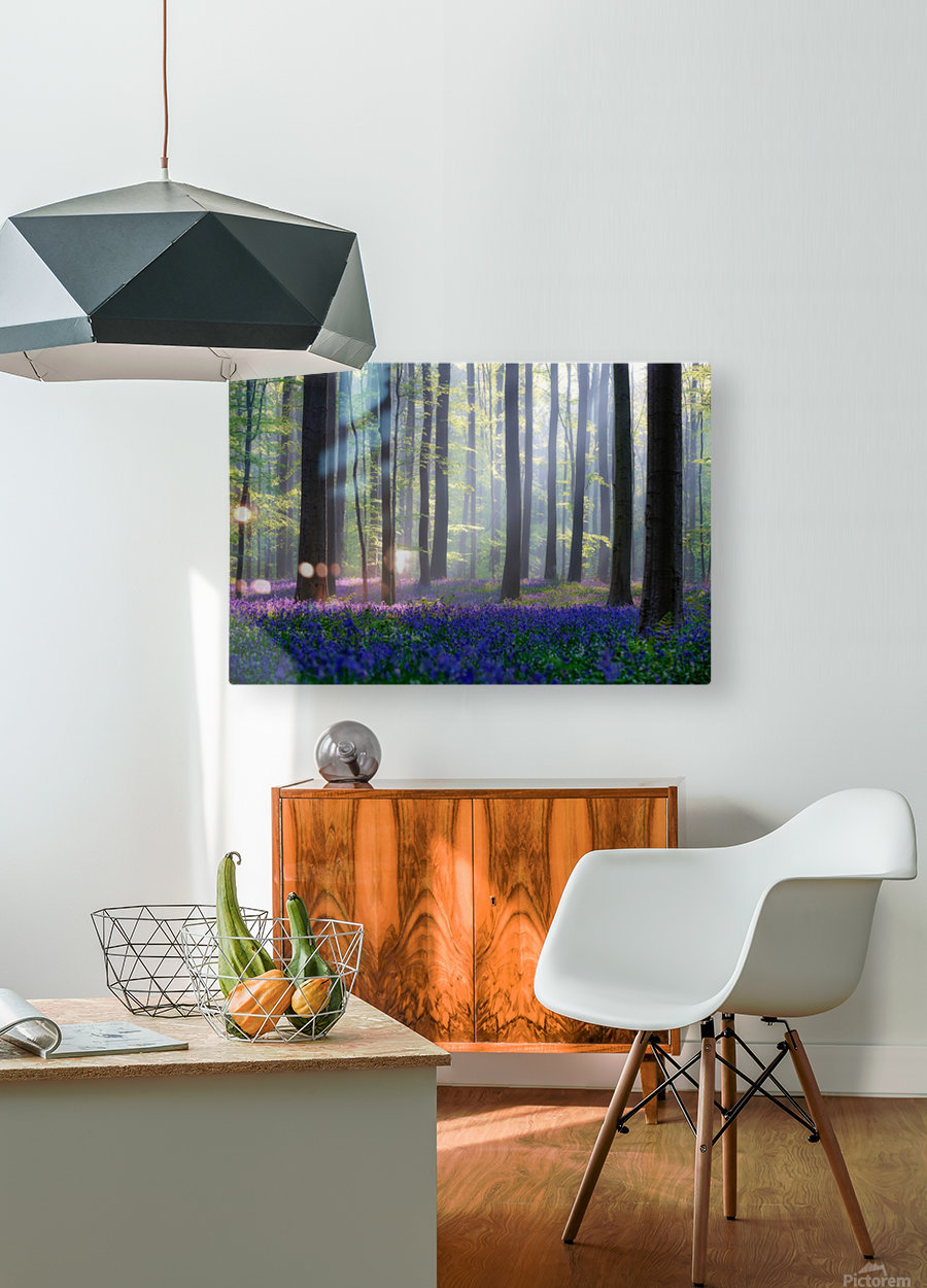 Bluebells  HD Metal print with Floating Frame on Back