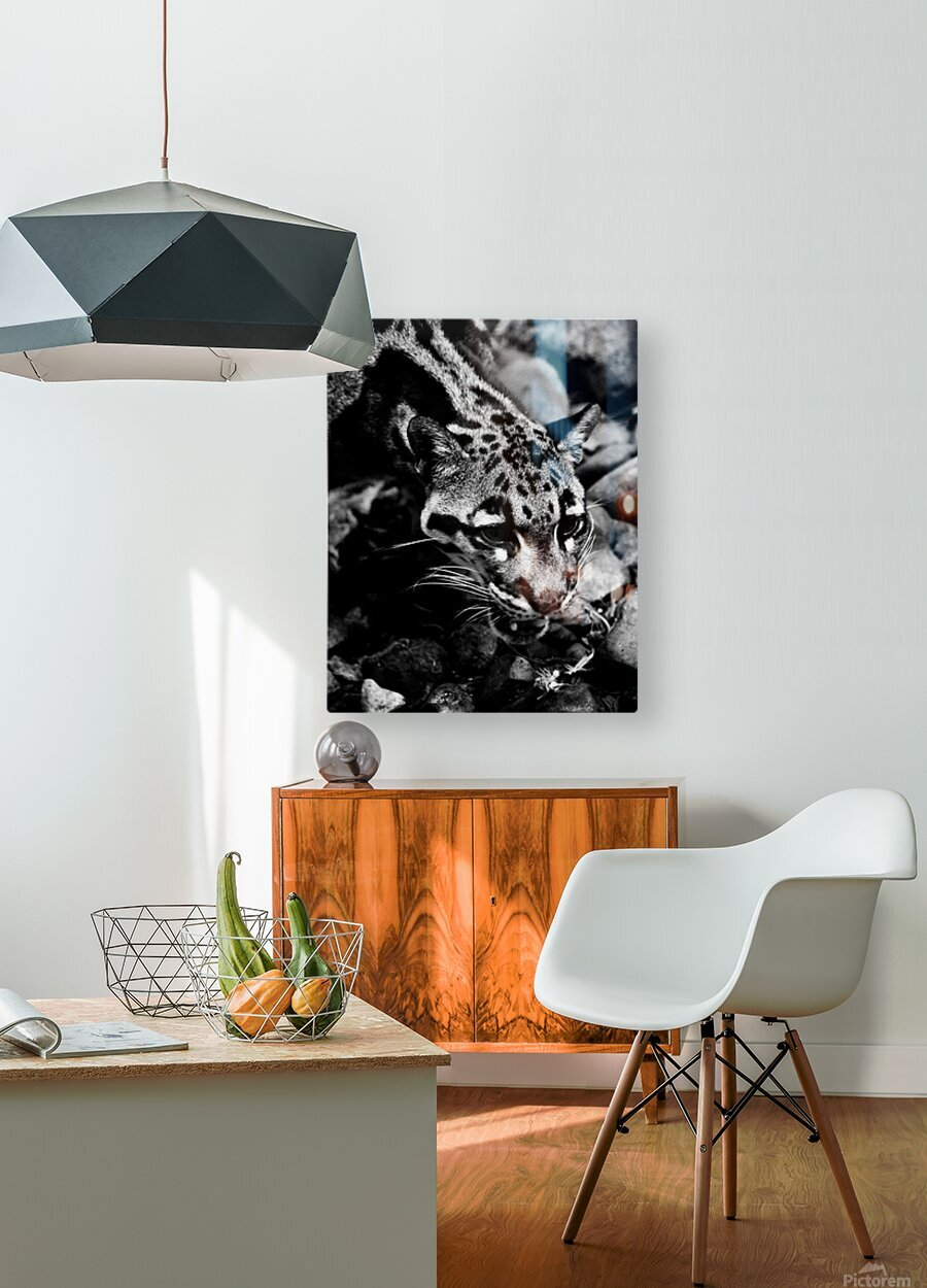 SPOTTED CAT  HD Metal print with Floating Frame on Back