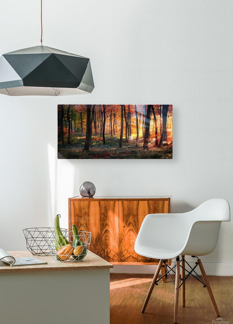 Autumn Woodland Sunrise  HD Metal print with Floating Frame on Back