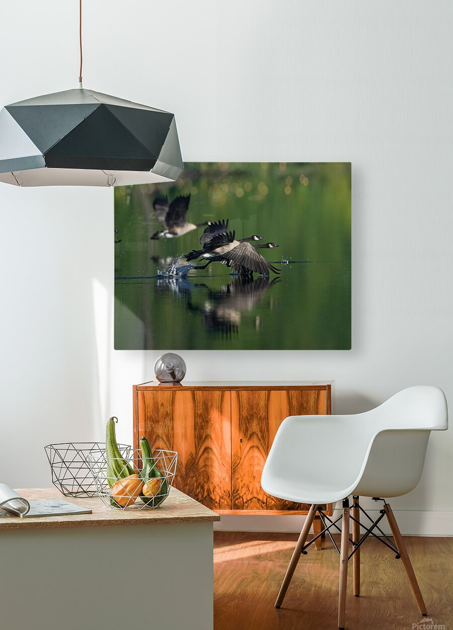 Wesley Allen Shaw 01788  HD Metal print with Floating Frame on Back