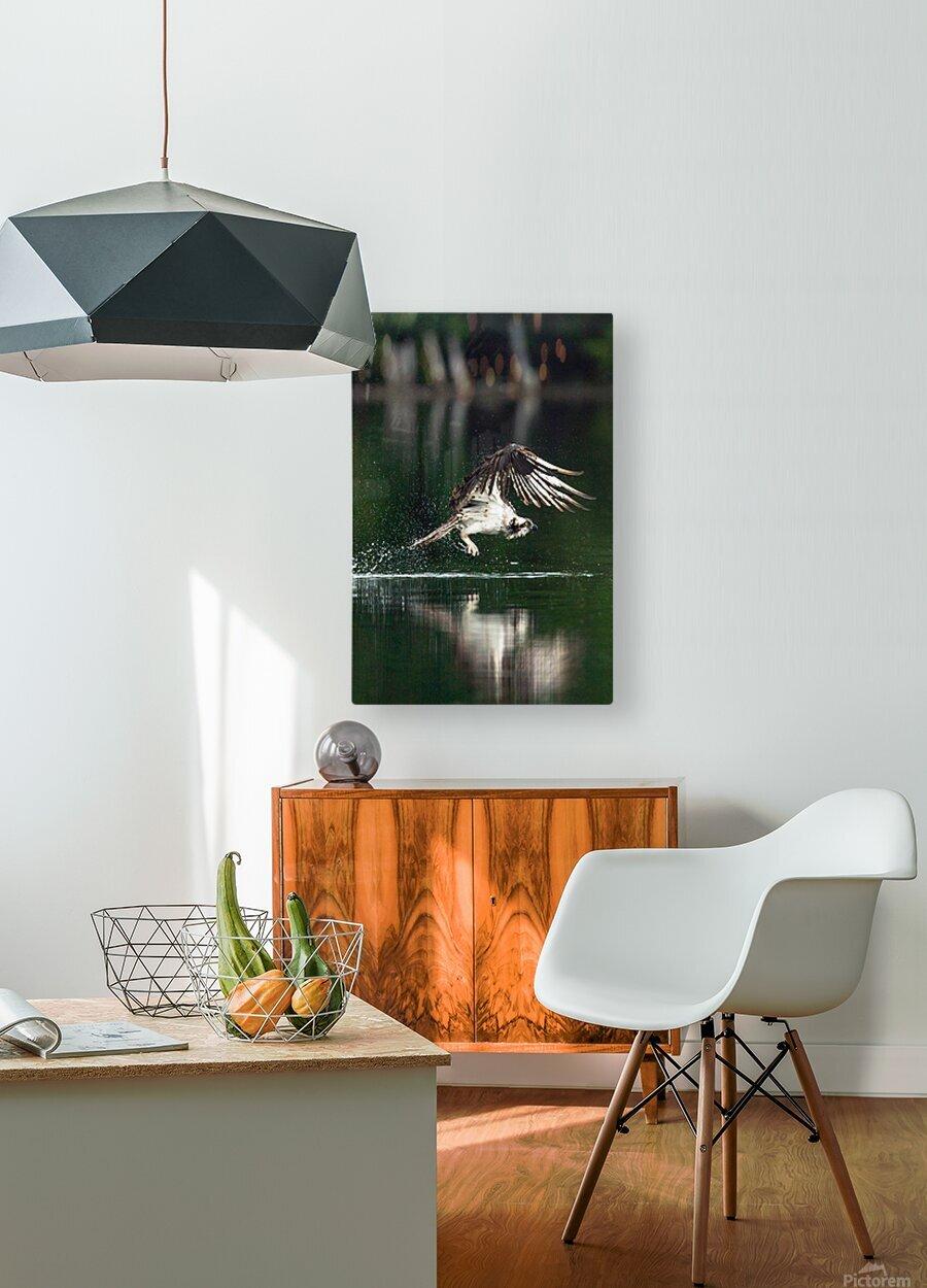 Wesley Allen Shaw 00898  HD Metal print with Floating Frame on Back