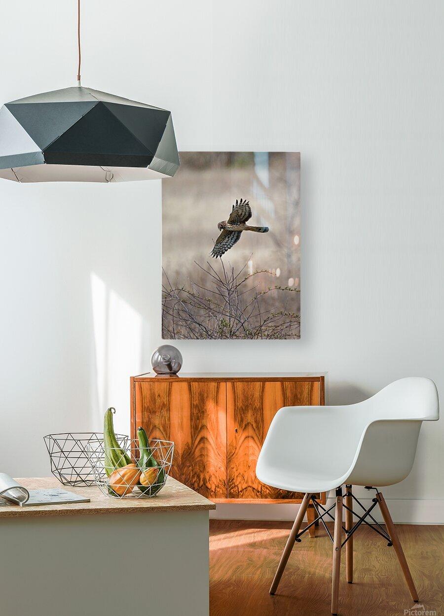 Wesley Allen Shaw 02112  HD Metal print with Floating Frame on Back