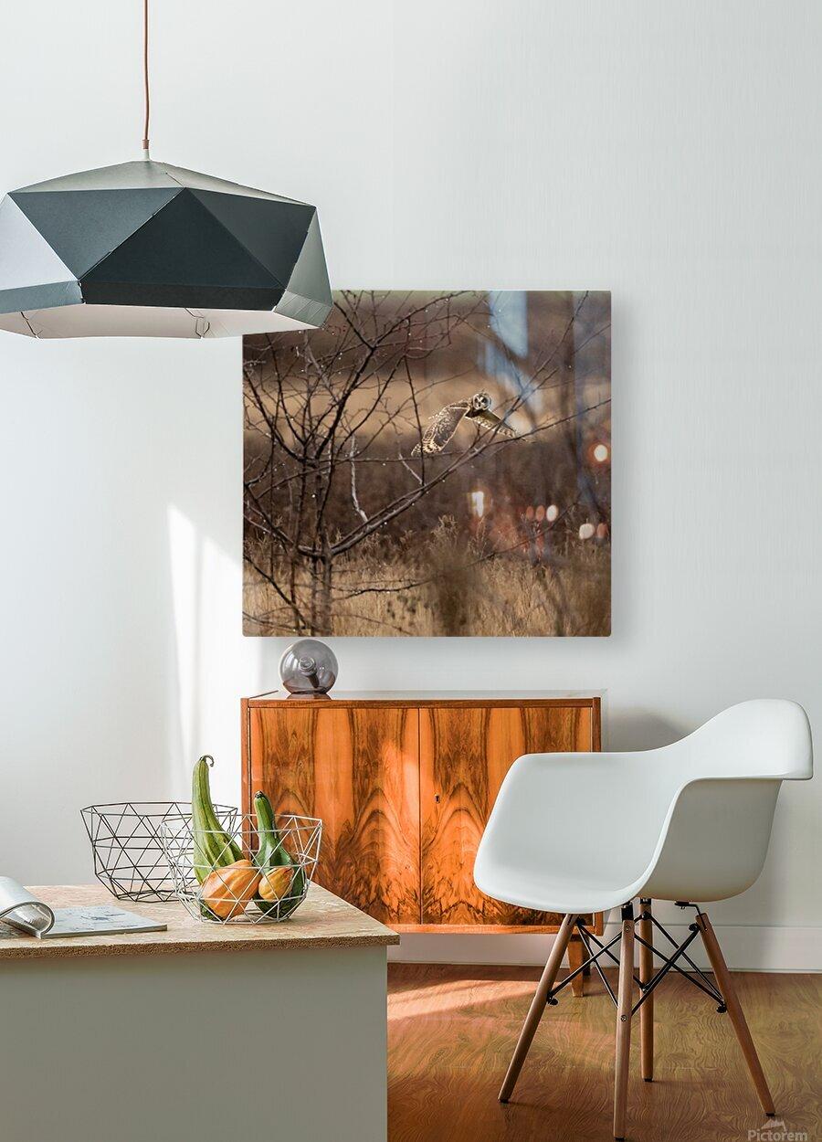 Wesley Allen Shaw 02117  HD Metal print with Floating Frame on Back