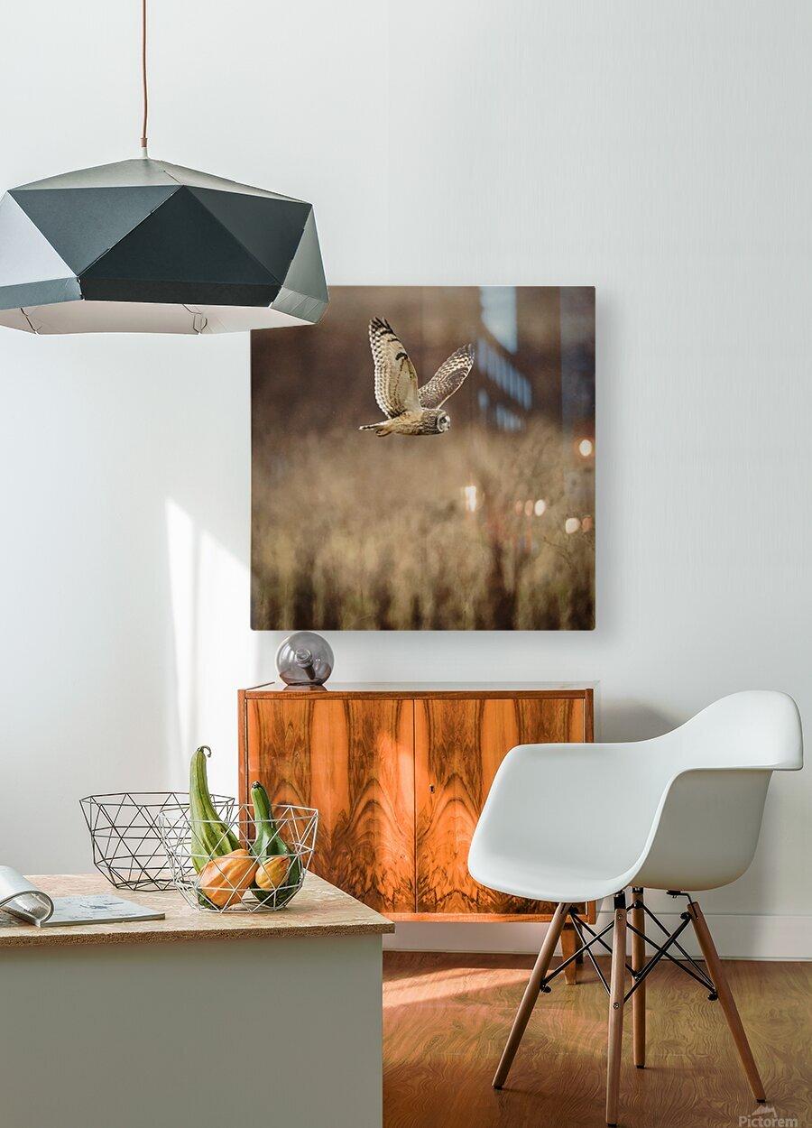 Wesley Allen Shaw 02133  HD Metal print with Floating Frame on Back