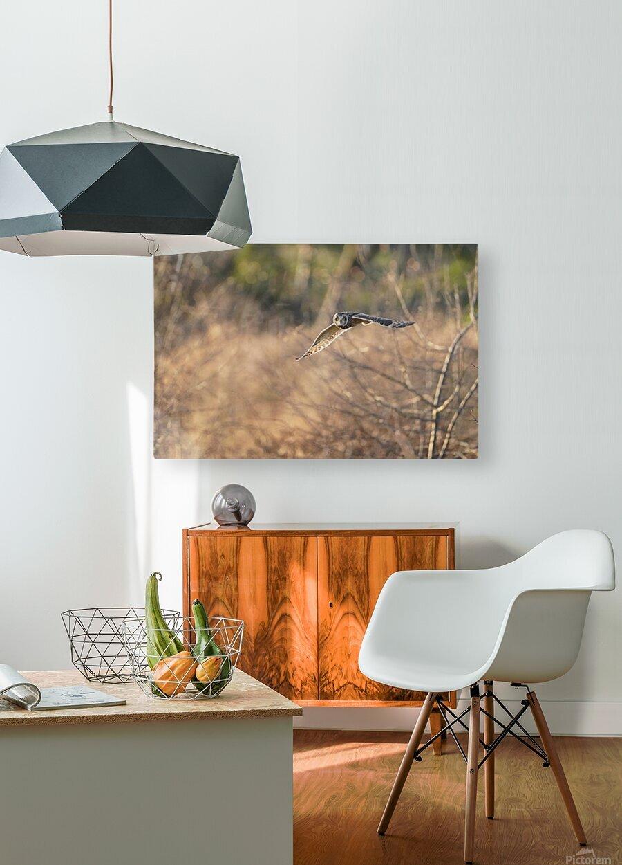 Wesley Allen Shaw 08787  HD Metal print with Floating Frame on Back