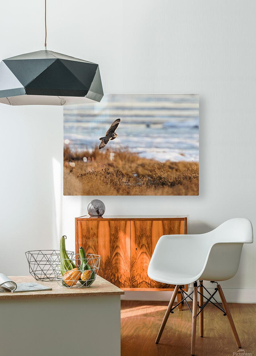Wesley Allen Shaw 04091  HD Metal print with Floating Frame on Back
