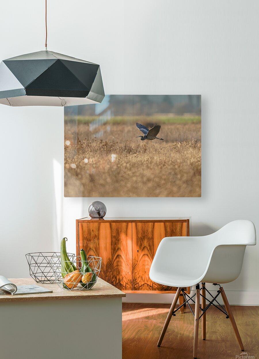 Wesley Allen Shaw 03939  HD Metal print with Floating Frame on Back