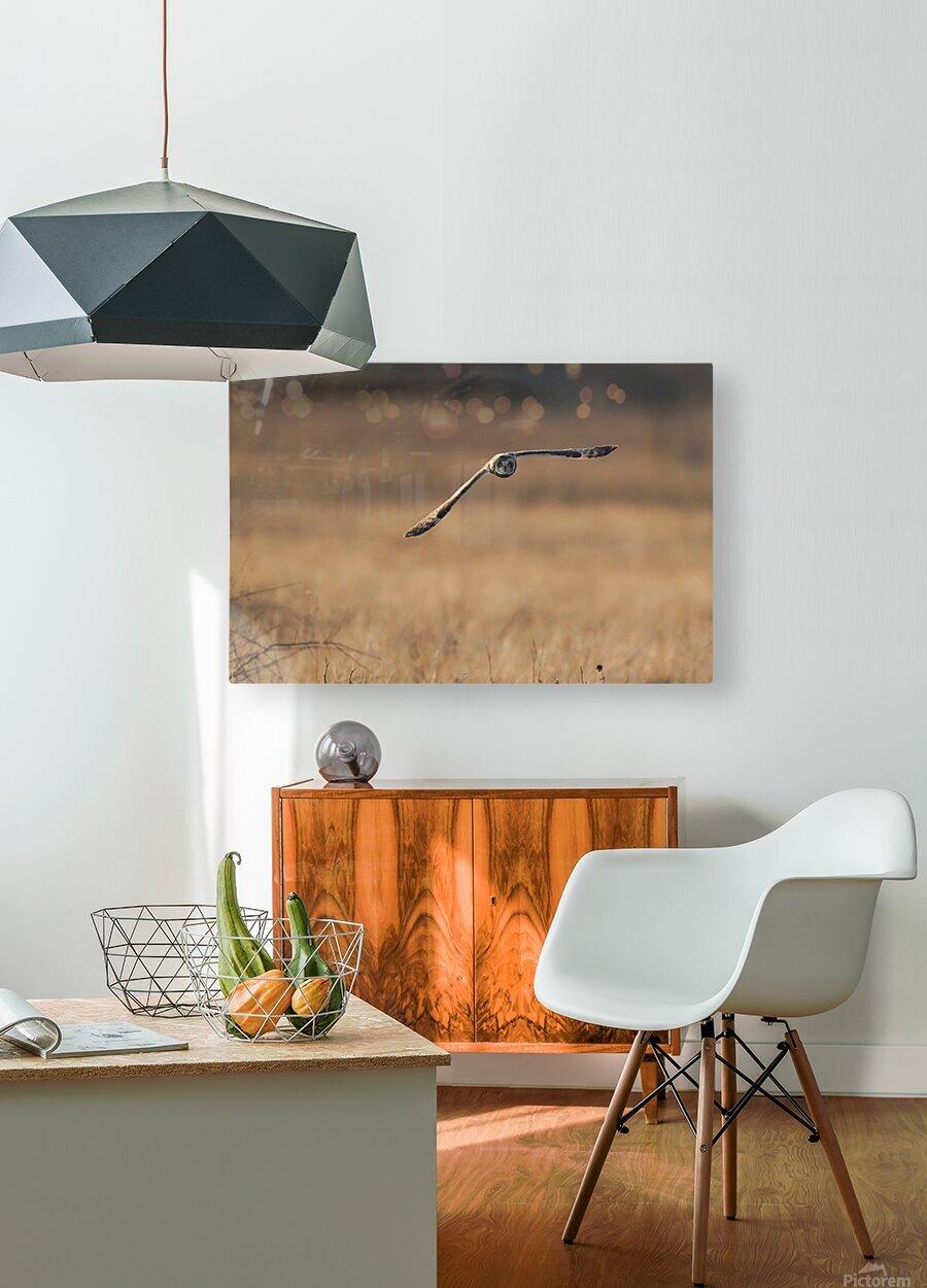 Wesley Allen Shaw 08720  HD Metal print with Floating Frame on Back