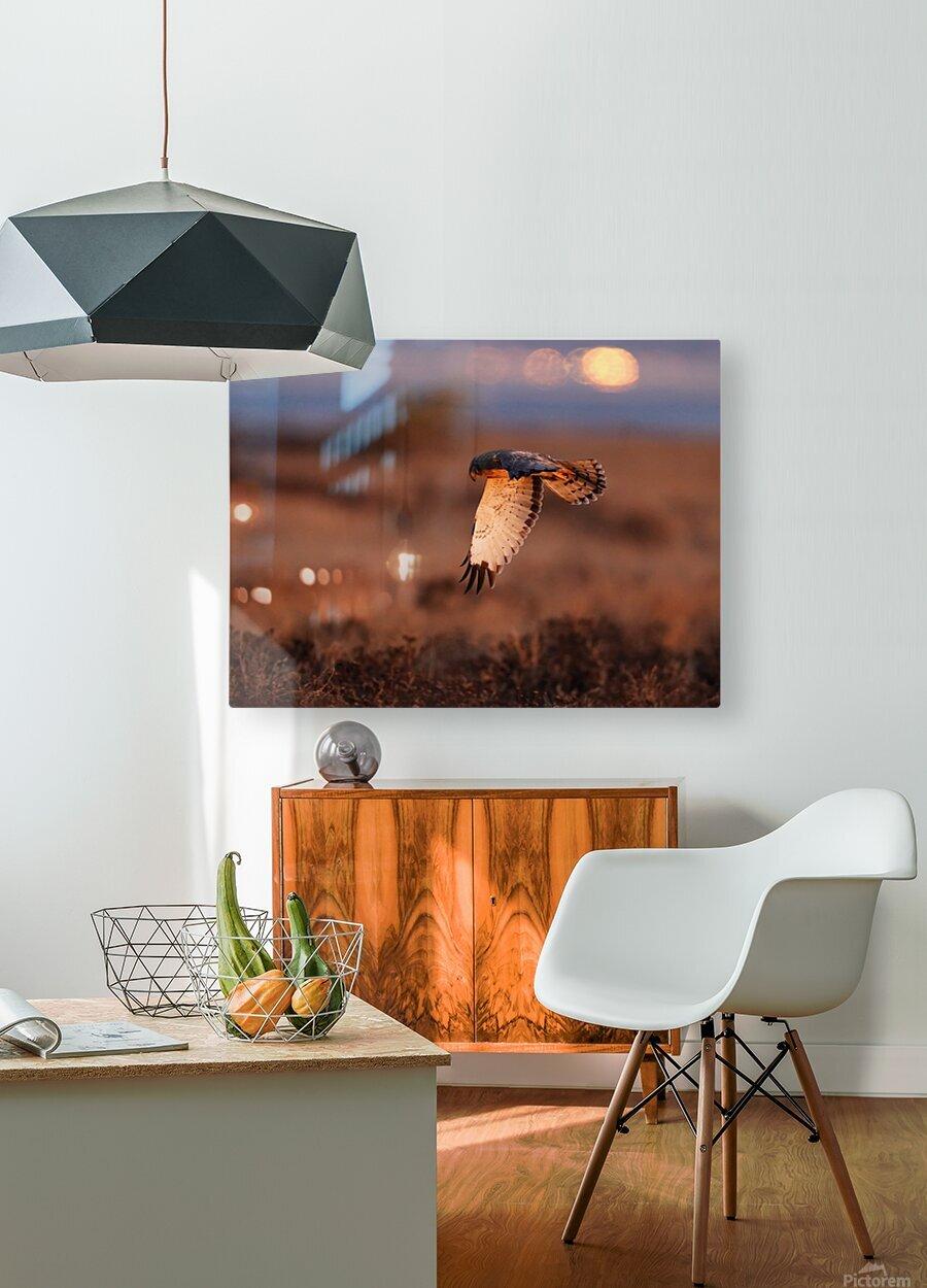 Wesley Allen Shaw 04277  HD Metal print with Floating Frame on Back