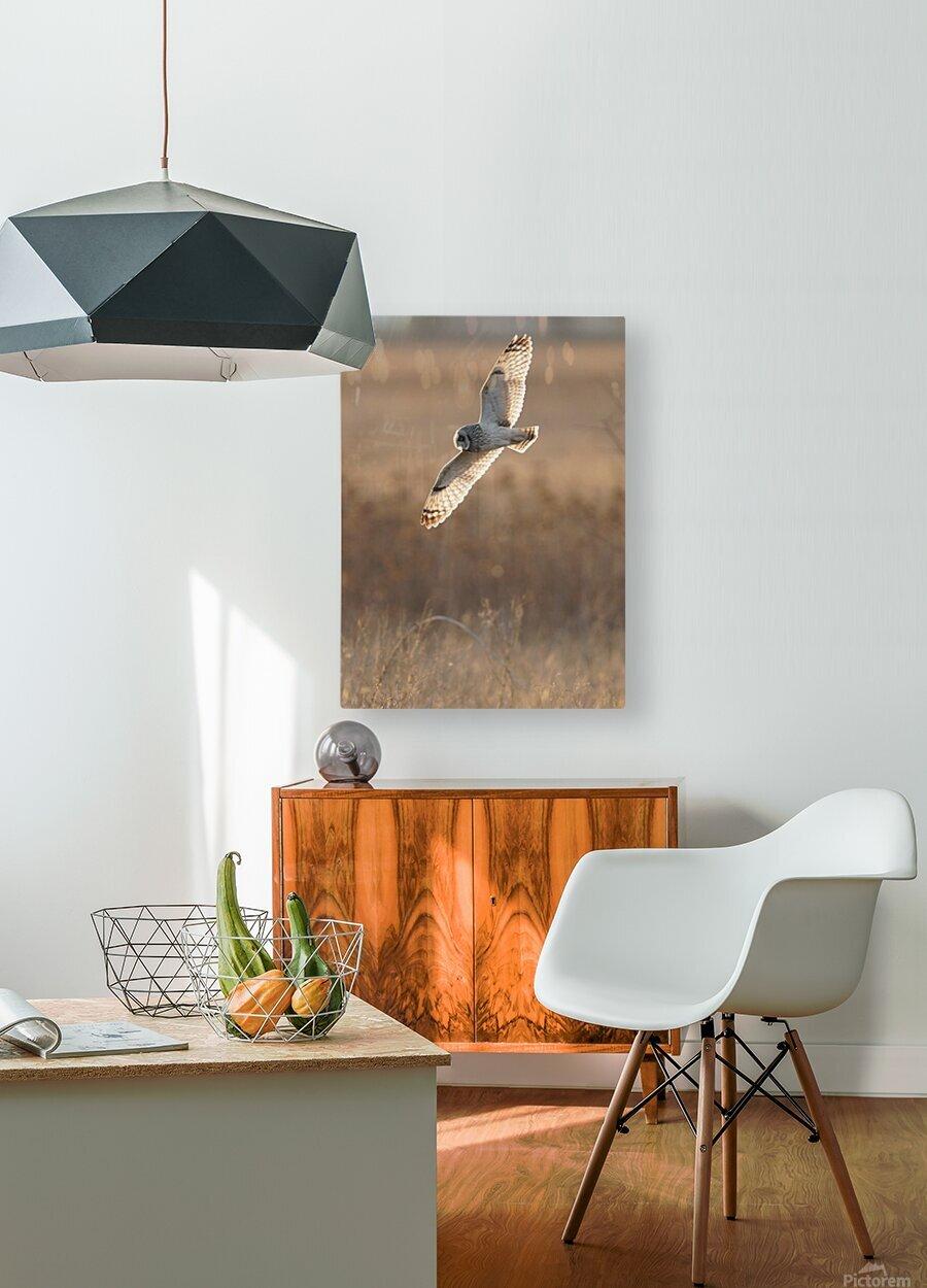 Wesley Allen Shaw 08970  HD Metal print with Floating Frame on Back