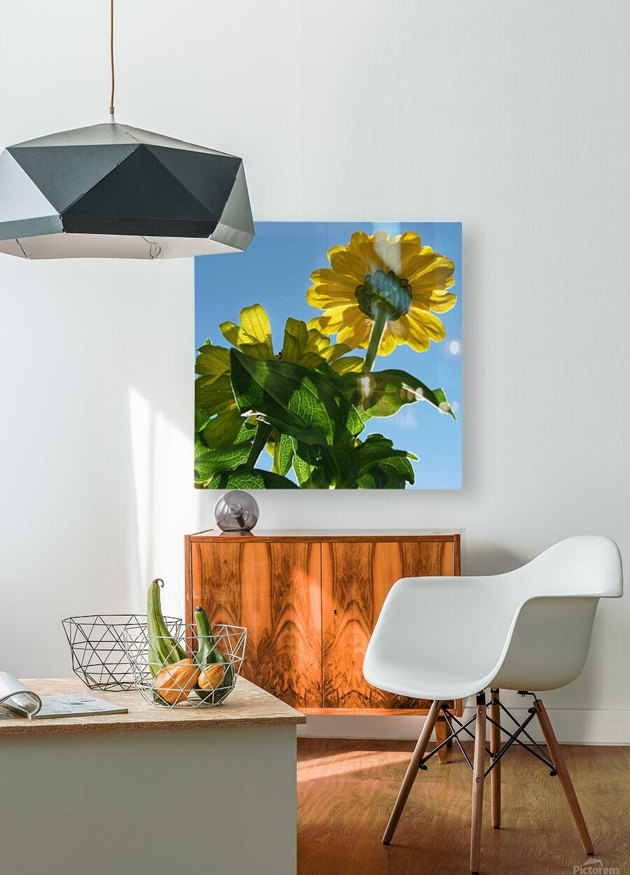 Summer Sky Flowers 8 AUG 2020  HD Metal print with Floating Frame on Back
