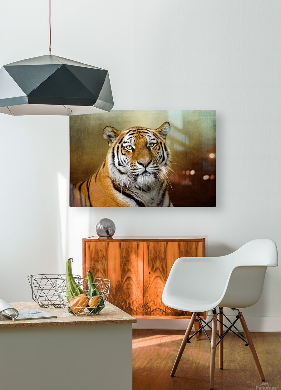 Bengal Tiger  HD Metal print with Floating Frame on Back