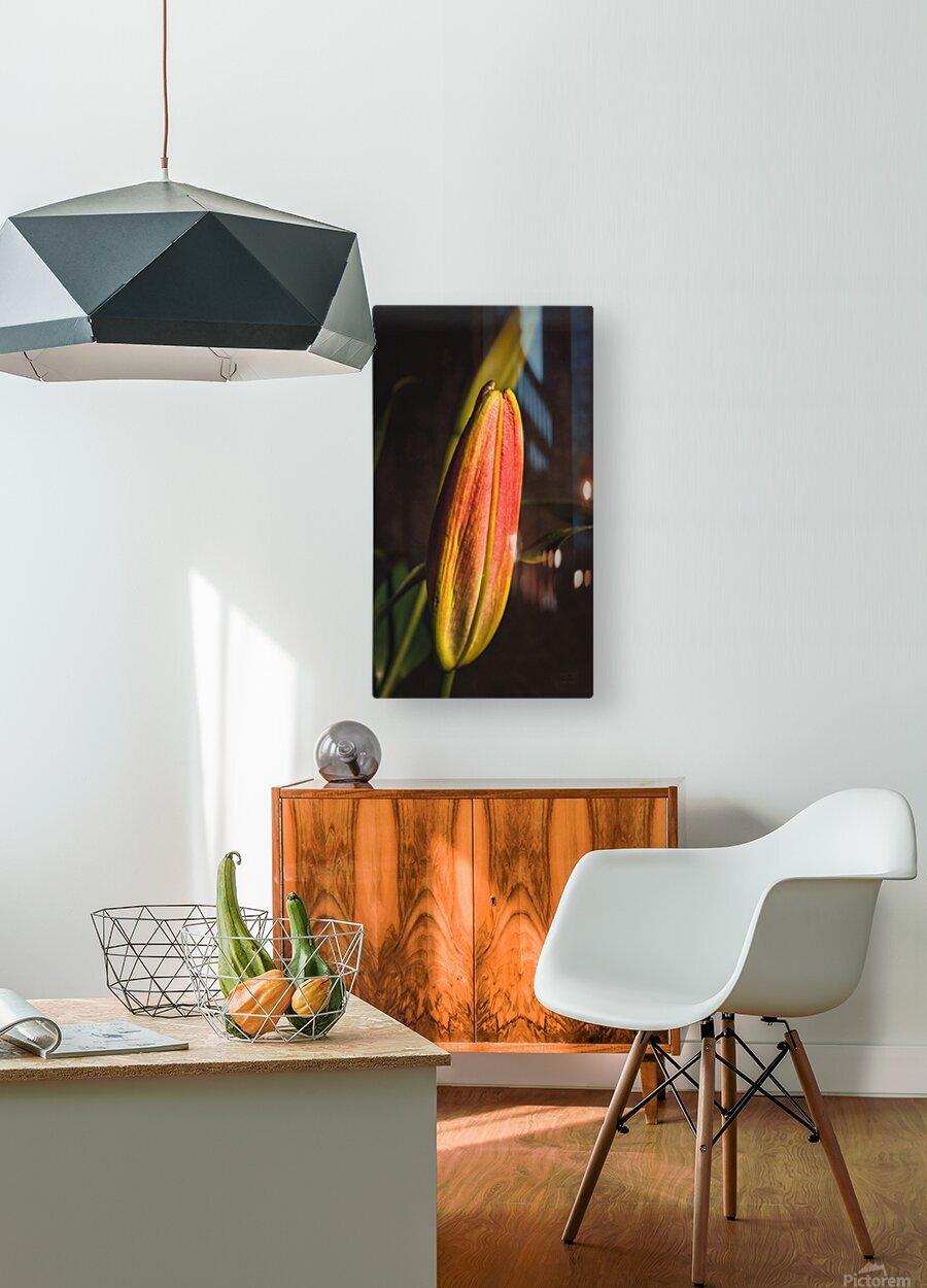 Etude Zen 3h  HD Metal print with Floating Frame on Back