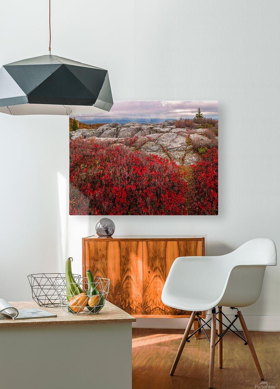 Bear Rocks Preserve apmi 1792  HD Metal print with Floating Frame on Back