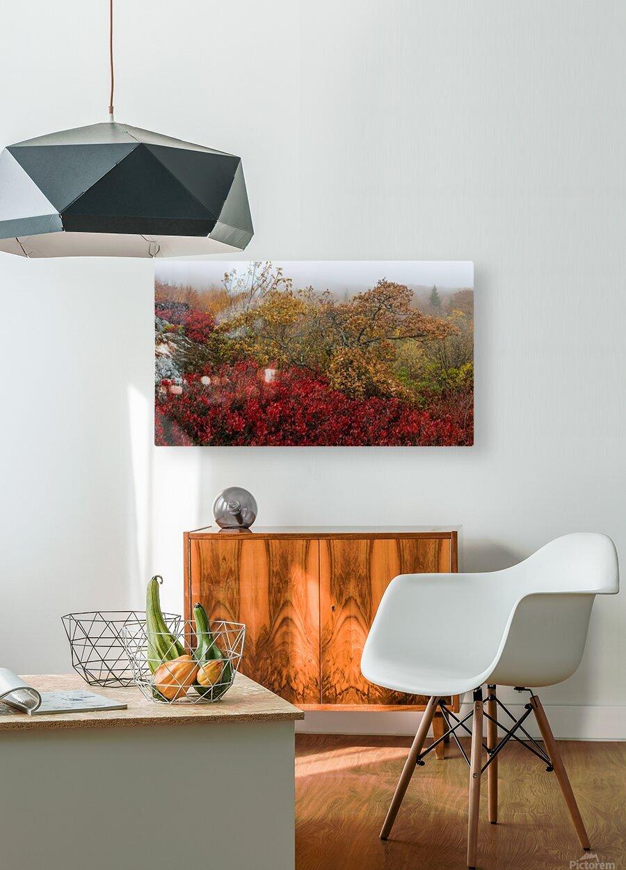 Bear Rocks Preserve apmi 1813  HD Metal print with Floating Frame on Back