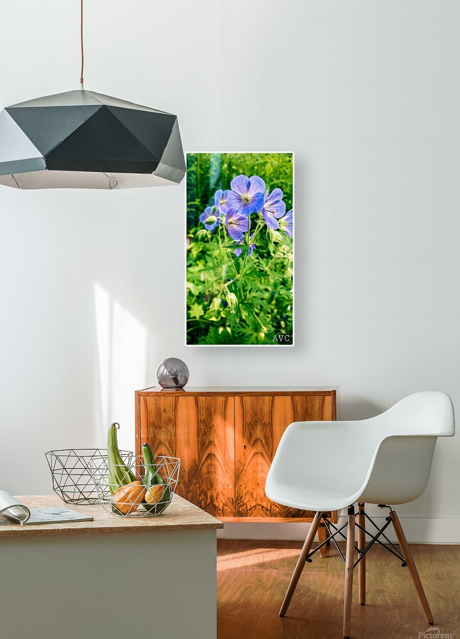 Periwinkle  HD Metal print with Floating Frame on Back