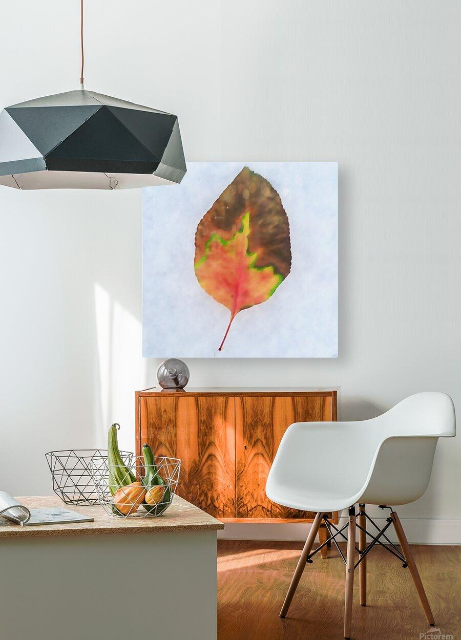 snow leaf  HD Metal print with Floating Frame on Back