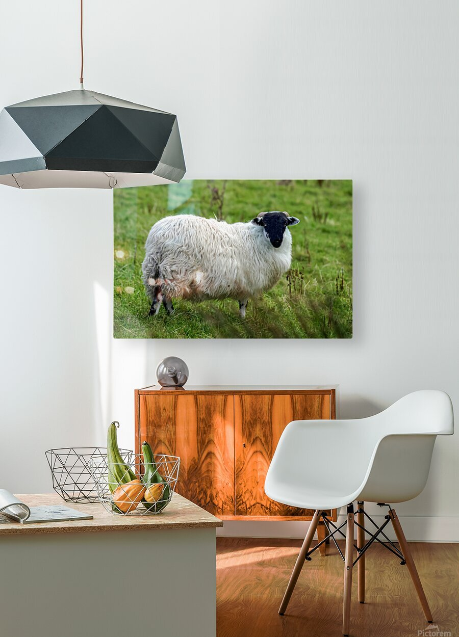 Donegal 28  HD Metal print with Floating Frame on Back