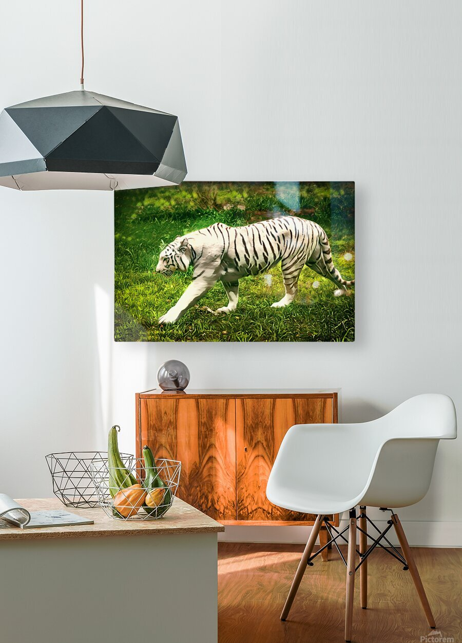 White Bengal Tiger  HD Metal print with Floating Frame on Back