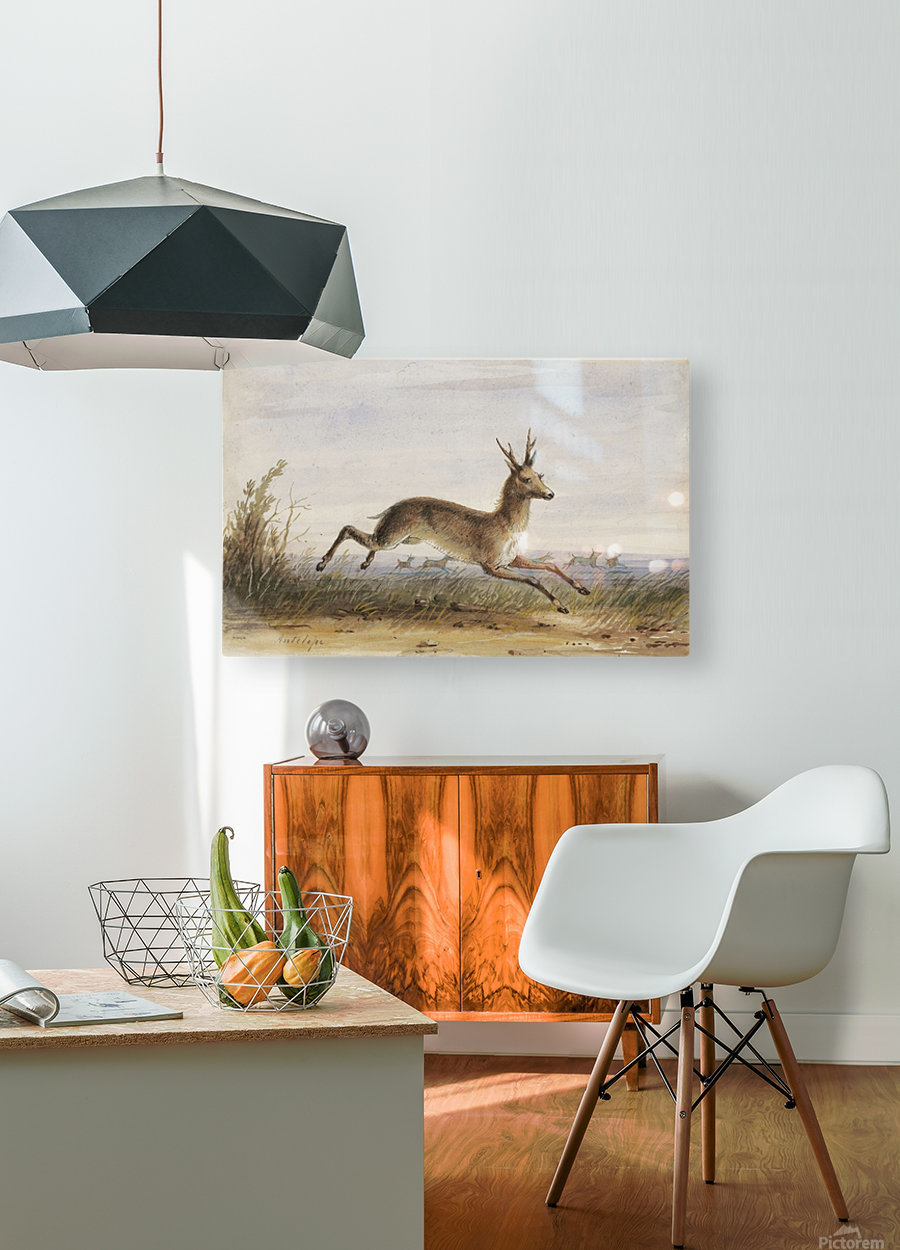 Antelope  HD Metal print with Floating Frame on Back