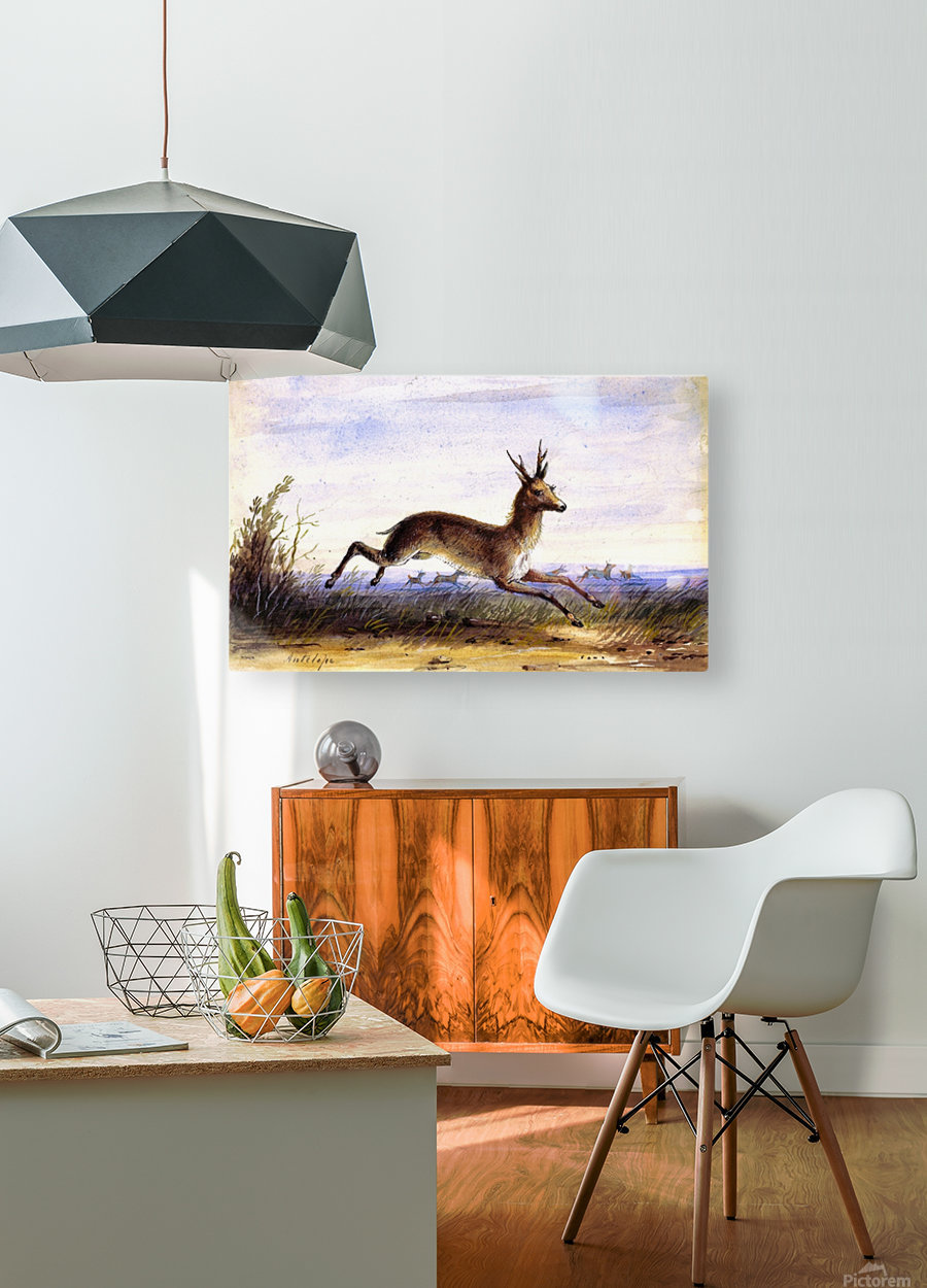Antelope running  HD Metal print with Floating Frame on Back