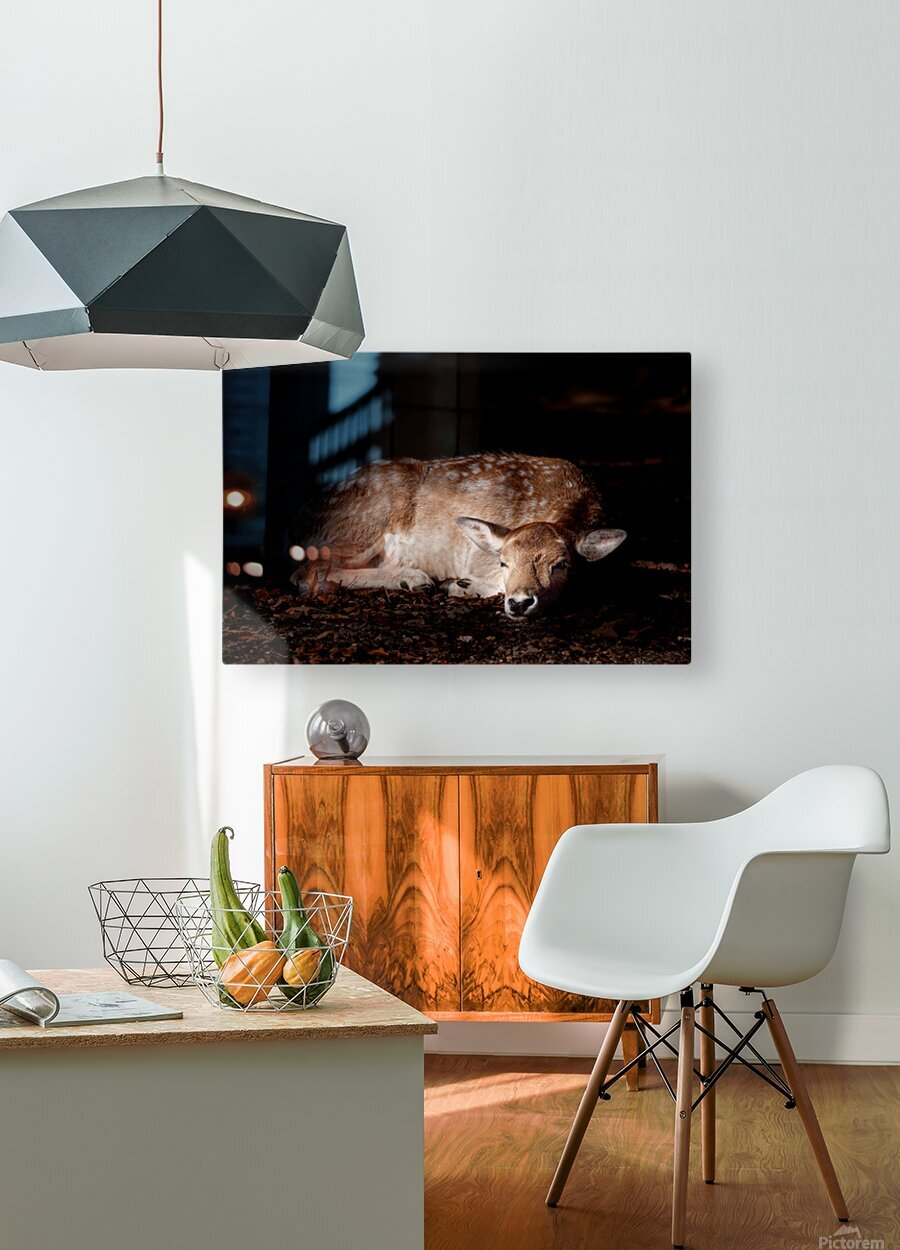 Fallow Deer 2  HD Metal print with Floating Frame on Back