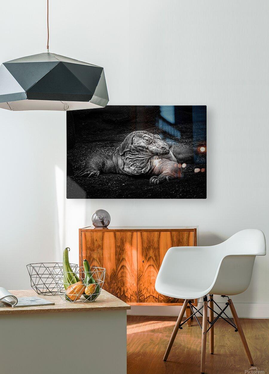 Komodo Dragon  HD Metal print with Floating Frame on Back