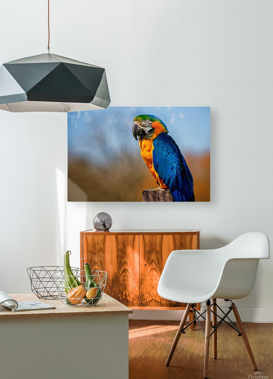 Parrot  HD Metal print with Floating Frame on Back