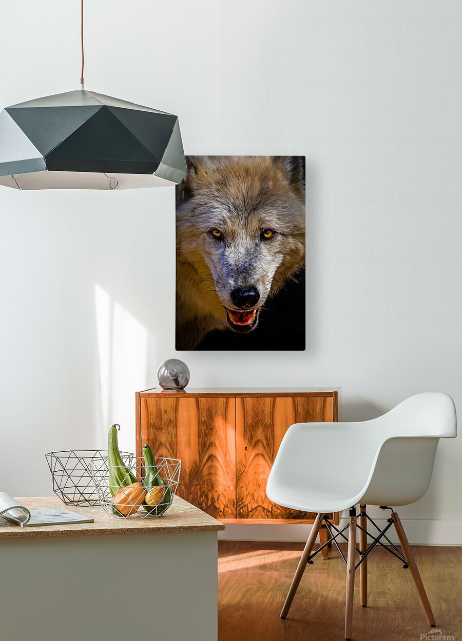 Wolf 2  HD Metal print with Floating Frame on Back