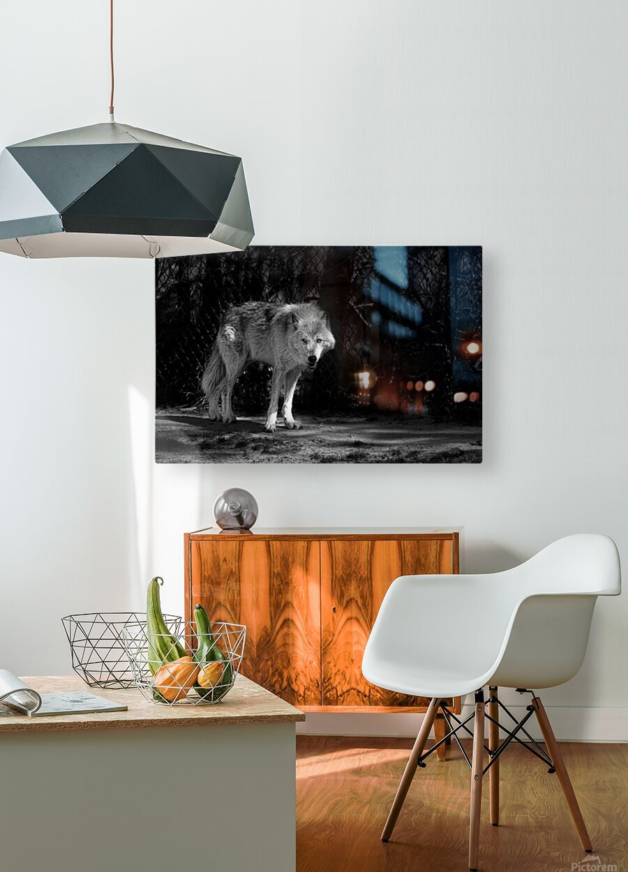 Wolf 1  HD Metal print with Floating Frame on Back