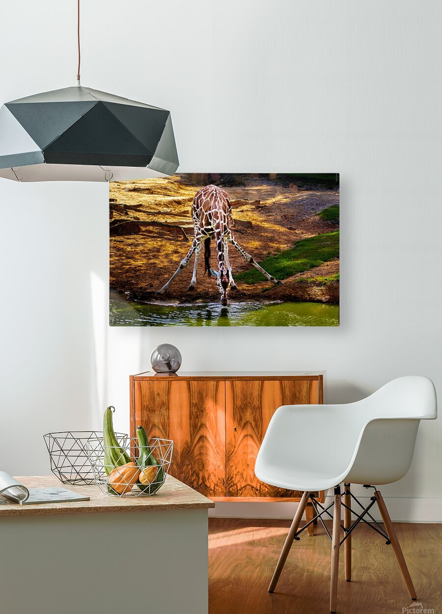 Reticulated Giraffe 2  HD Metal print with Floating Frame on Back