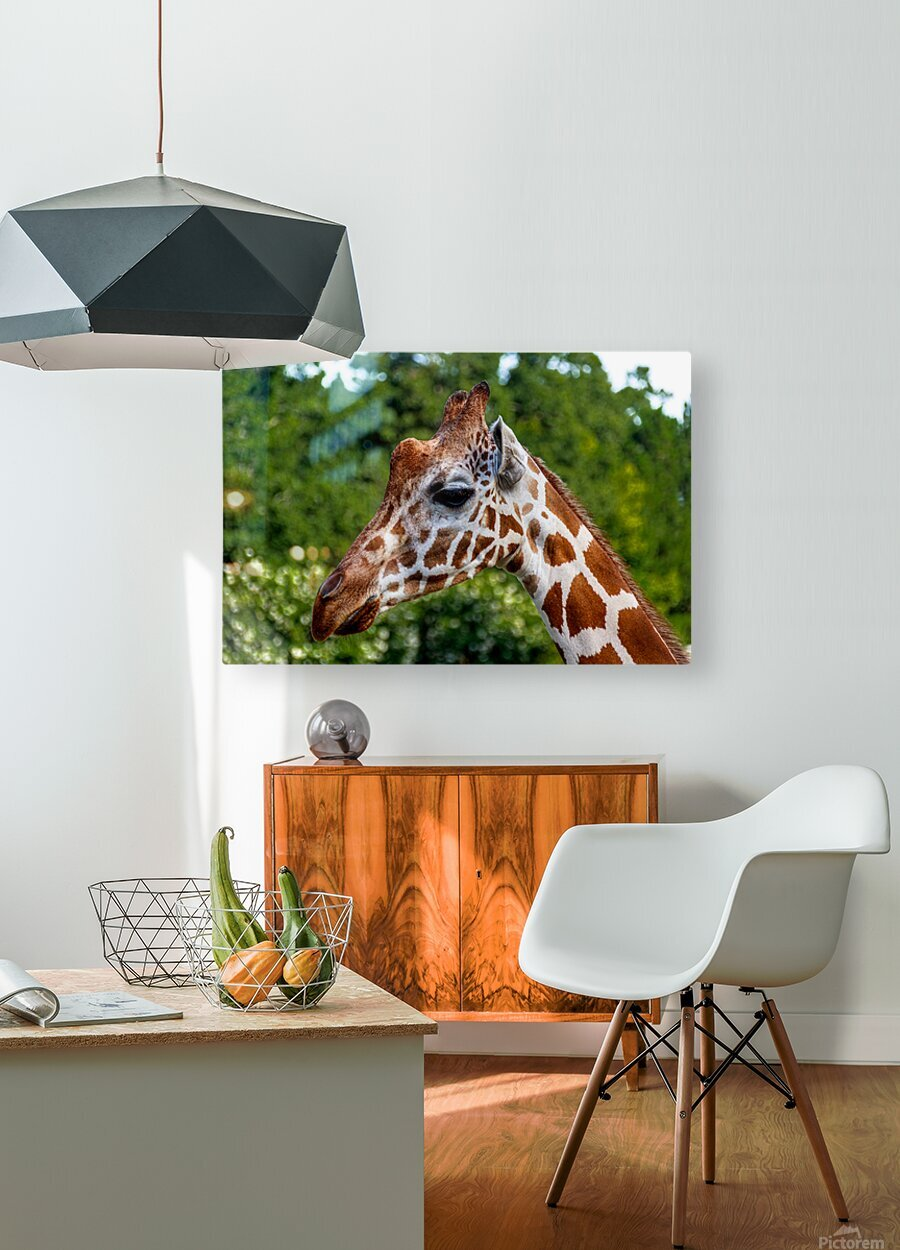 Reticulated Giraffe 1  HD Metal print with Floating Frame on Back