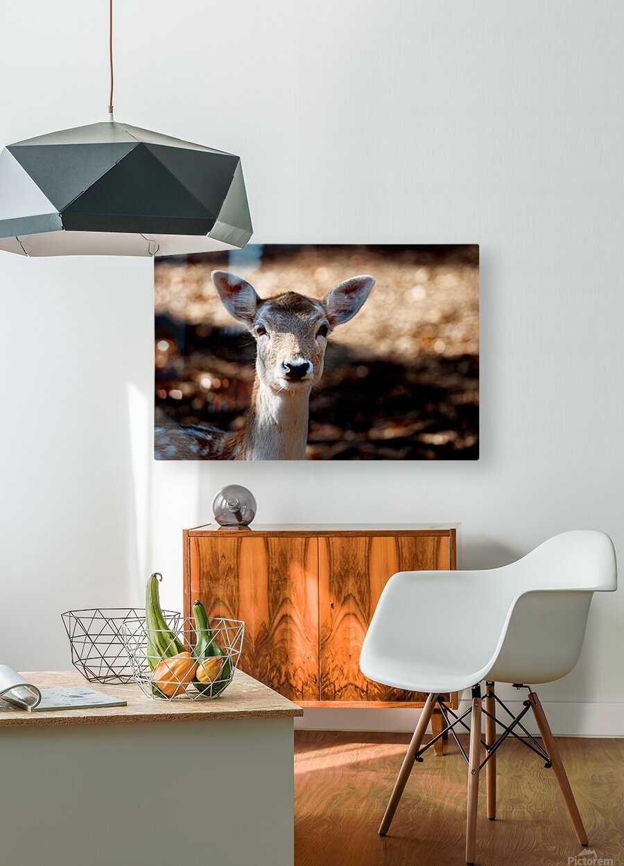 Fallow Deer 1  HD Metal print with Floating Frame on Back