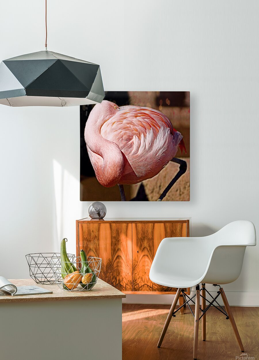 Flamingo  HD Metal print with Floating Frame on Back
