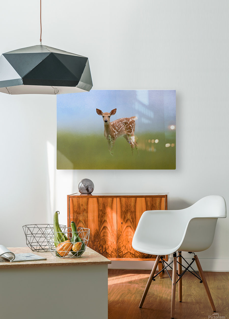 Spotty the Fawn  HD Metal print with Floating Frame on Back
