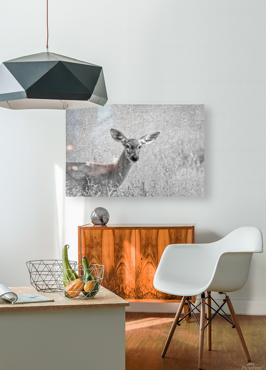 Pretty Doe  HD Metal print with Floating Frame on Back