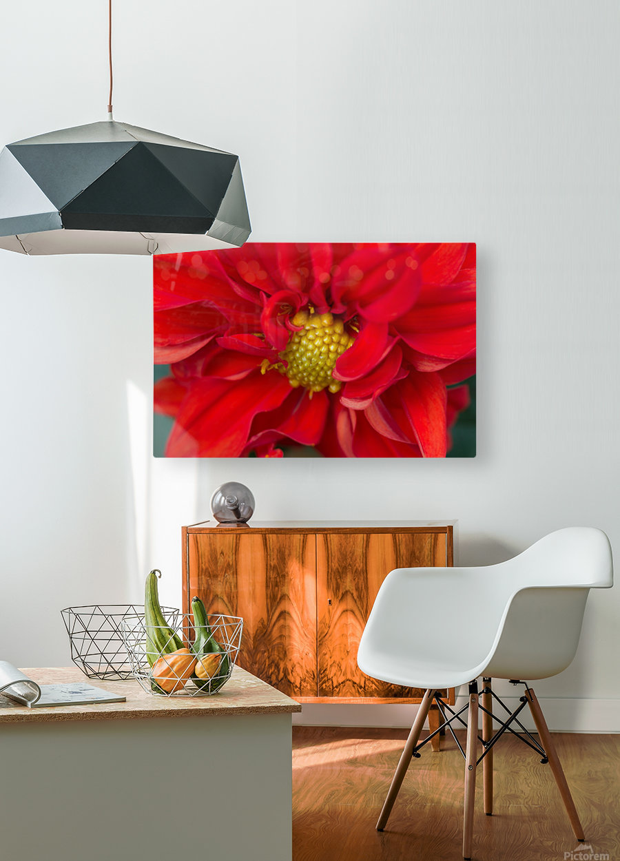 Red and Yellow  HD Metal print with Floating Frame on Back