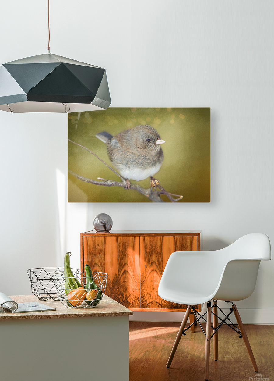 Dark Eyed Junco with Texture  HD Metal print with Floating Frame on Back