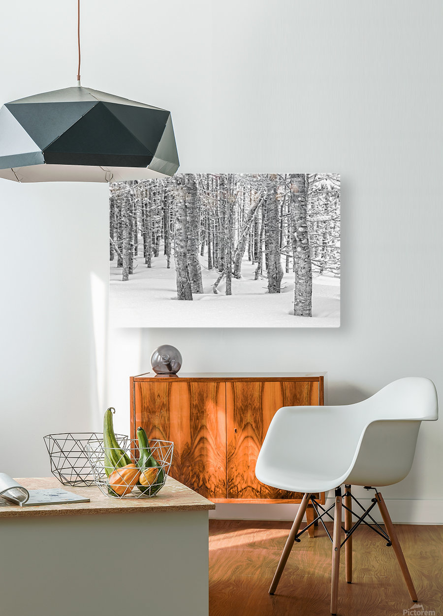 Pines at the Skyline Trail  HD Metal print with Floating Frame on Back