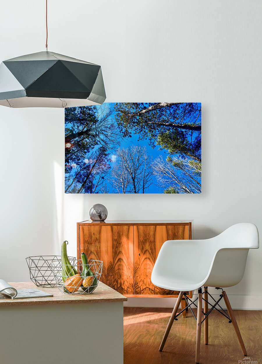 Towering Trees Bright Blue Sky  HD Metal print with Floating Frame on Back